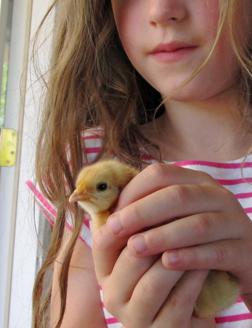 Lou&Chick