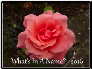 What's In A Name 9